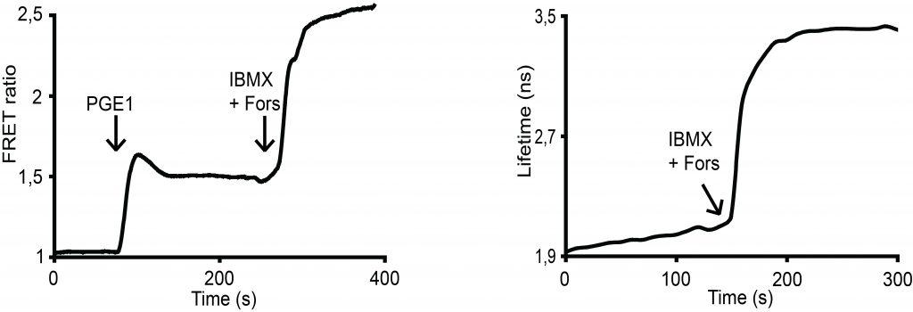 epac-ratio-flim